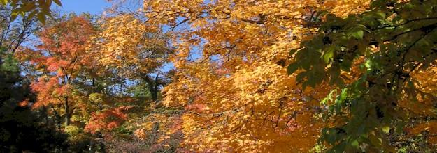 fall10.jpg