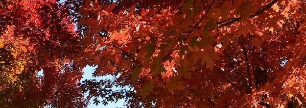 fall31.jpg