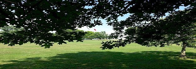 commons2.jpg